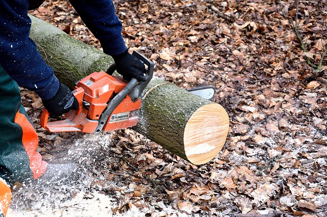 Top 10 Best Gas Chainsaws in 2021 Reviews